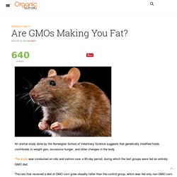 Are GMOs Making You Fat?