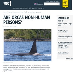 Are Orcas non-human persons?
