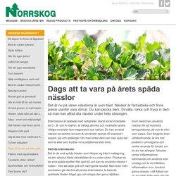 Dags att ta vara på årets späda nässlor - Norrskog.se