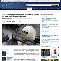 L'ours polaire argentin Arturo, dépressif et épuisé par la canicule, lorgne le Canada