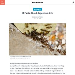 Argentine Ant Facts