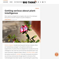 The argument over plant learning and memory