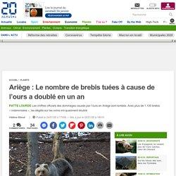 Ariège: Le nombre de brebis tuées à cause de l'ours a doublé en un an