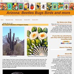 The Saguaro Cactus and its visitors