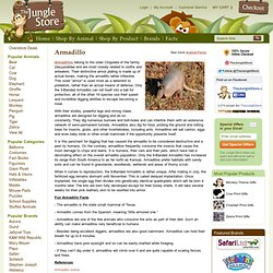 Fun facts about the Armadillo - Armadillo Facts and Information - The Jungle Store