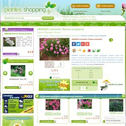 ARMERIA maritima 'Rosea compacta' - Plantes vivaces
