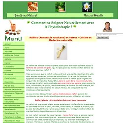 Raifort (Armoracia rusticana) et vertus - Cuisine et Médecine naturelle
