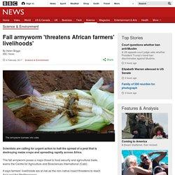 Fall armyworm 'threatens African farmers' livelihoods'