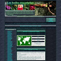 Estragon Aromathérapie - Huile essentielle, fiche technique, descriptif, usages et applications
