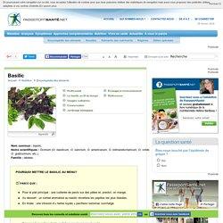 Le basilic, une herbe aromatique antioxydante