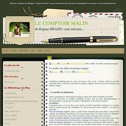La menthe, une plante aromatique magique - LE COMPTOIR MALIN