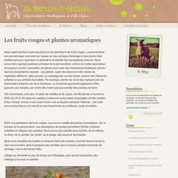 La Ferme d'Emilie » Les fruits rouges et plantes aromatiques - Agriculture biologique à l'île d'Yeu