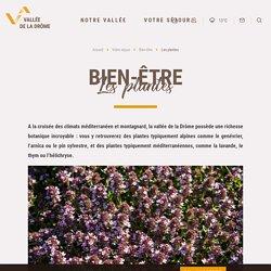 Plantes aromatiques & médicinales - Huile essentielle - Vallée de la Drôme