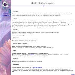 Arrachage et conservation des bulbes gélifs, glaïeuls, Dahlia, Canna...