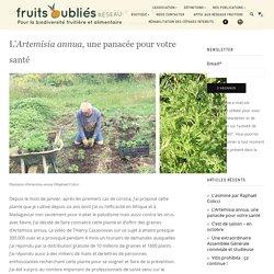 L'Artemisia annua, une panacée pour votre santé - Fruits Oubliés Réseau