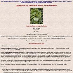 Mugwort, Artemisia vulgaris, Dreaming,