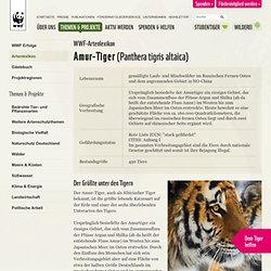 Arten A-Z - Amur-Tiger