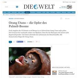 Artensterben: Orang Utans – die Opfer des Palmöl-Booms