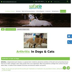 Low-Cost Arthritis Treatment Hospital for Dogs and Cats