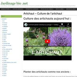 Artichaut - Culture des artichauts - Jardinage bio