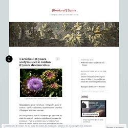 L'artichaut (Cynara scolymus) et le cardon (Cynara dracunculus)