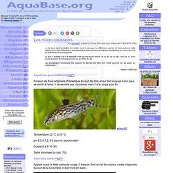 Les micro-poissons