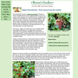 Renee's Articles: Alpine Strawberries