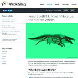 Fossil Spotlight: Meet Maiacetus, the Mother Whale! - Stated Clearly [in English]
