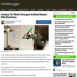 Creating The World's Strongest Artificial Muscles With Biomimicry :...