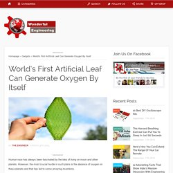 World's First Artificial Leaf Can Generate Oxygen By Itself