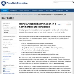 Using Artificial Insemination in a Commercial Breeding Herd — Beef Cattle