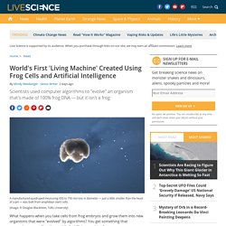 World's First 'Living Machine' Created Using Frog Cells and Artificial Intelligence