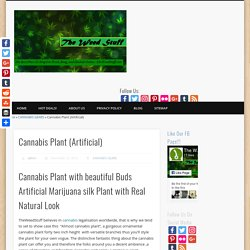Cannabis Plant - Artificial Marijuana Plant - TheWeedStuff.com