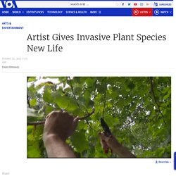 Patterson Clark Artist Gives Invasive Plant Species New Life: white mulberry