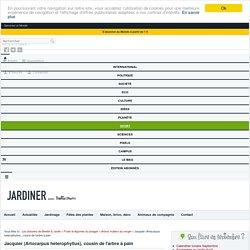 Jacquier (Artocarpus heterophyllus) : plantation, culture, entretien