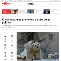 El oso Arturo es prisionero de una pelea política