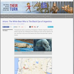 Arturo: The White Bear Who is The Black Eye of Argentina