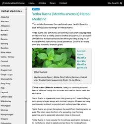 Yerba buena (Mentha arvensis) Herbal Medicine, Health Benefits, Side effects, Warning