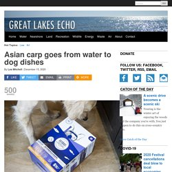 GREAT LAKES ECHO 15/12/20 Asian carp goes from water to dog dishes