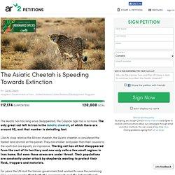 texte de la pétition: The Asiatic Cheetah is Speeding Towards Extinction