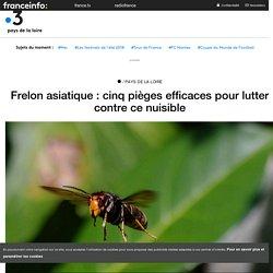FRANCE 3 30/07/18 Frelon asiatique : cinq pièges efficaces pour lutter contre ce nuisible
