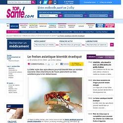 Le frelon asiatique bientôt éradiqué