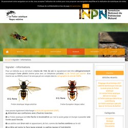 Frelon Asiatique sur le site de l'INPN