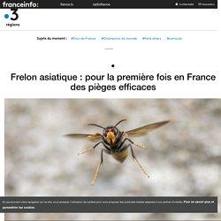 FRANCE 3 13/07/18 Frelon asiatique : pour la première fois en France des pièges efficaces
