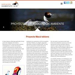 Asociación Ambiente Sur. Proyecto Macá tobiano
