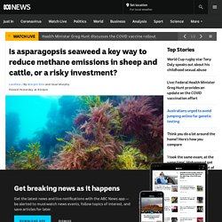 Is asparagopsis seaweed a key way to reduce methane emissions in sheep and cattle, or a risky investment?