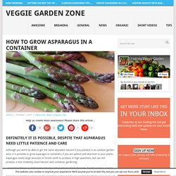 How to Grow Asparagus in a Container - Veggie Garden Zone