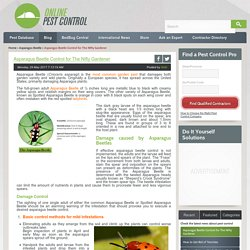 Asparagus Beetle Control for The Nifty Gardener - Online Pest Control