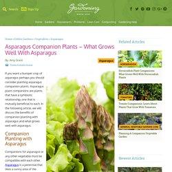 Asparagus Plant Companions: What Are Good Companions For Asparagus