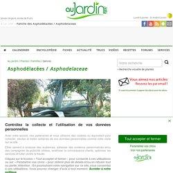 Famille des Asphodélacées / Asphodelaceae